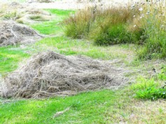 Grass cuttings heaped to allow invertebrates to escape before removal