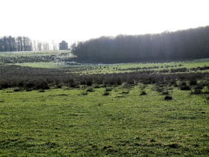 Rush Pasture near Rotunda in Stainborough Parkland