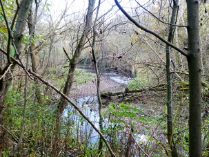 Wet Woodland along the River Dove