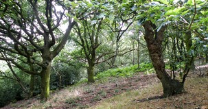 Mixed deciduous woodland with bracken in Rockley woods
